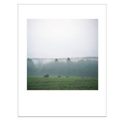 Valokuvavedos sumuisesta kesäpellosta
