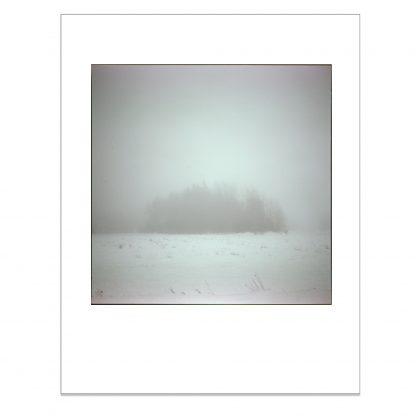 Valokuvavedos puskasta sumun keskellä