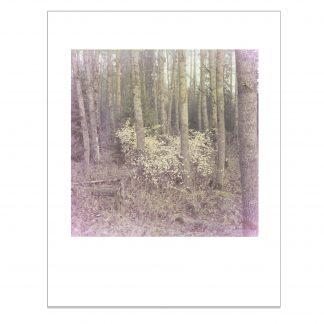 Haapametsässä kasvava keltalehtinen pensas