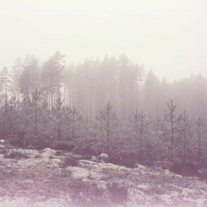 Riitta Supperin valokuva Uusi metsä