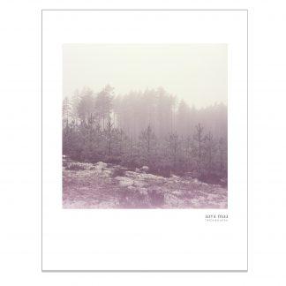 Riitta Supperin valokuva Uusi metsä julisteena